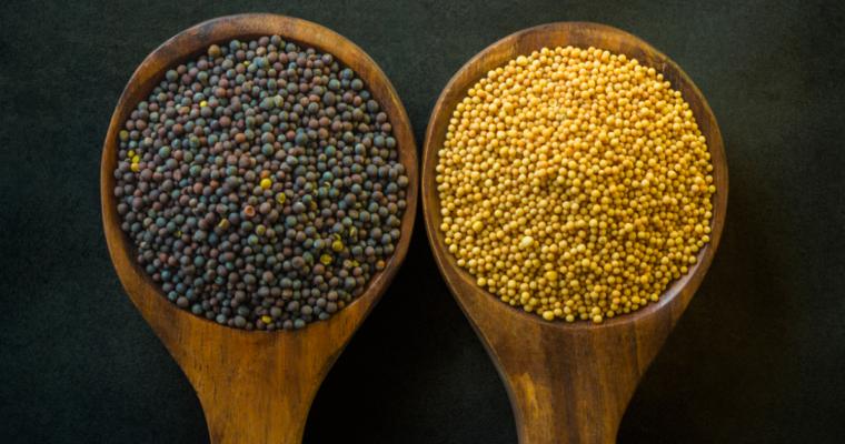 Is Mustard Vegan?